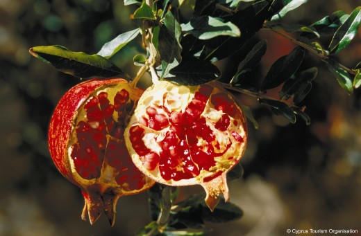The Pomegranate, a symbol of Aphrodite