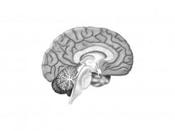 Symptoms of Encephalitis and Treatment