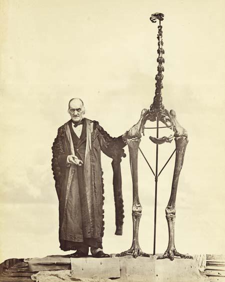 Owen with moa skeleton.