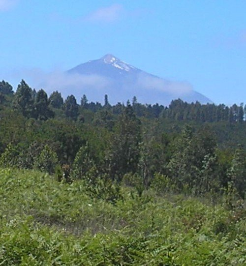 Mt Teide as seen from Agua Garcia woodlands