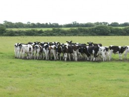 Herd mentality and following the crowd