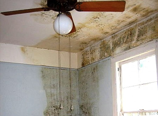 Mold infestation in homes is generally due to dampness, poor ventilation and leaky roofs, walls and rising damp from the foundations.