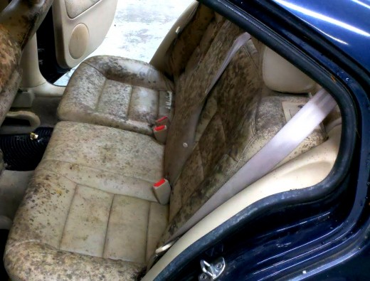 Mold in cars often develops due to leaks or to water or liquid spills that are not allowed to dry properly. Closed cars are ideal  environments for molds