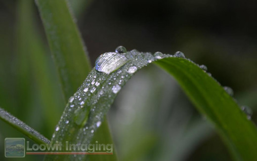 """""""Early morning dew and raindrops on a blade of grass."""""""
