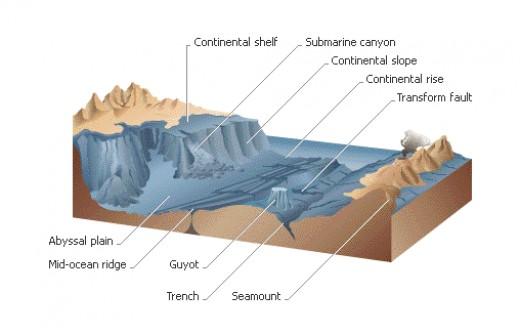 Images of ocean floor for Ocean floor zones diagram
