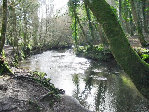 River Lemon, Bradley Woods, Devon, England