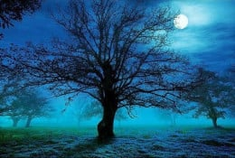 The sky was a cold iron-grey, a sharp breeze rattled the leaves on the immature trees, a spitiful chill wind that sought out her weakest places, the nape of neck and her knees which denied her the comfort of dreaming.