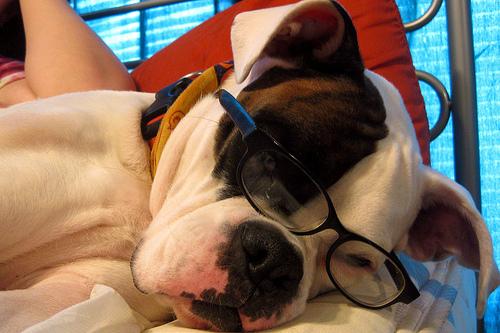 One smart dog