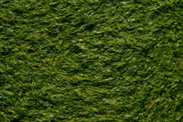 The texture of seaweed
