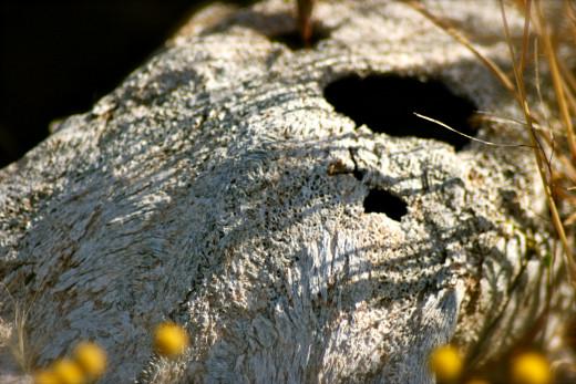 A horse's skull slowly dissolves into the sandy soil.