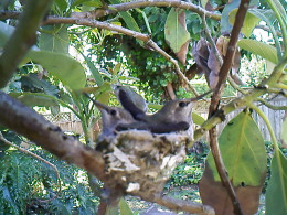 Hummy and Mer on their nest.
