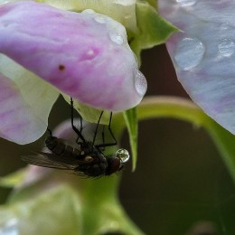 Despite carrying numerous germs, flies are also beneficial to the environment. They can help to pollinate some plants.