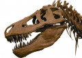 Interesting Facts about the Tyrannosaurus Rex