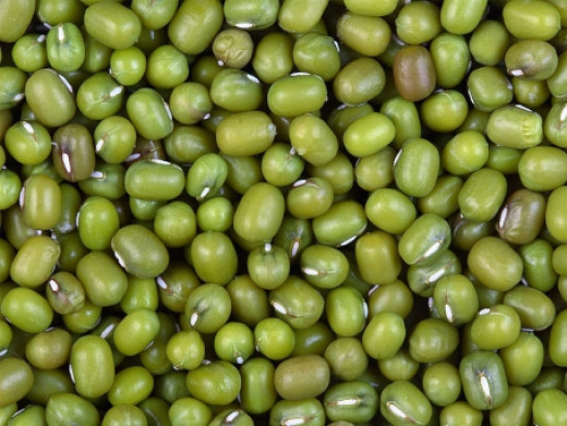 Mung bean (Phaseolus sp)