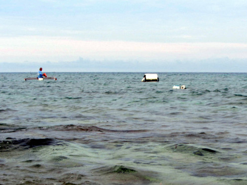 Go straight towards the white buoy to see the sea turtles!