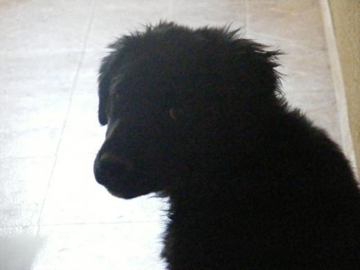 12 week old puppy behavior and development