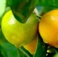 Homemade Lemon and Lime Hand Scrub