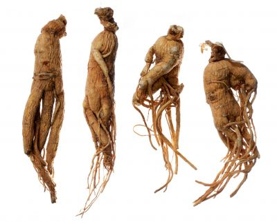 Ginseng or 'Man root'