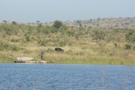 Shithave Dam with Buffalo, Waterbuck and birds in attendance