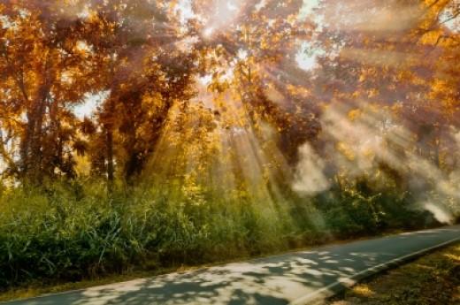 Rays of autumn sunshine