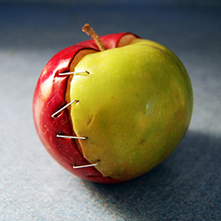 Frankenapple - Coming to a supermarket near you.
