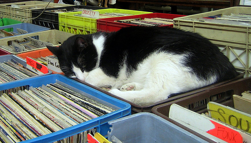 "Record Store Kitteh sez ""Zzzzzz....Buy More Vinyl!"""