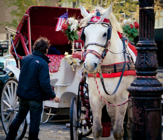 New York carriage horse, looks like fun but it is not.