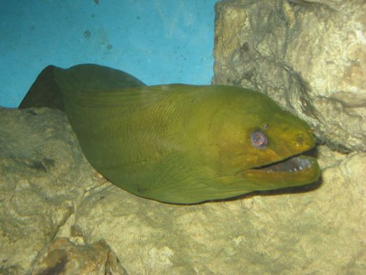 See sharks and moray eels at the Gatlinburg Aquarium.