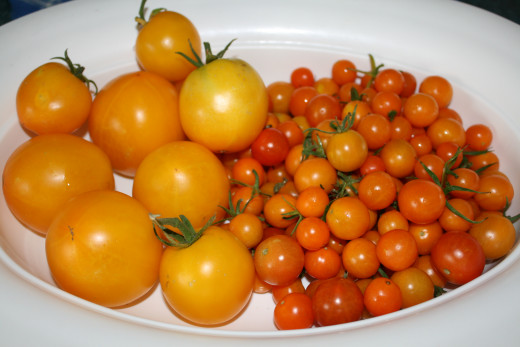 Tomato varieties bring different flavors to the soups.