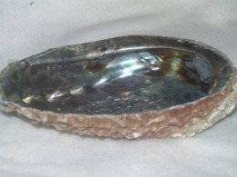 Abalone Shell often used with smudge sticks