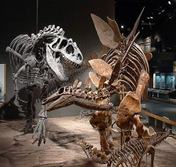 Interesting Facts About The Stegosaurus