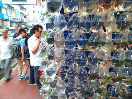Customers browsing at Hong Kong Goldfish Market