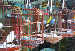 Exquisite bamboo cages and birds