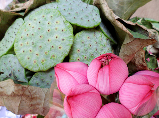 Lotus buds and seed pods at Hong Kong Flower Market
