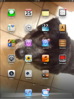typical iPad 2 screen (but not a typical dog)