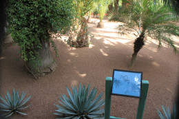 The plants in the Jardin Majorelle are showcased on signs with details of origin and names