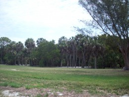Who knows what things lurk in the trees of Fort DeSoto
