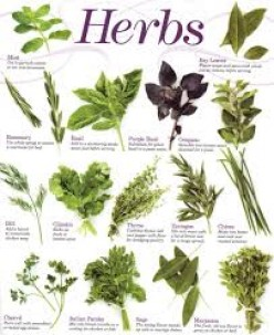 Harvesting, Drying and Storing Herbs