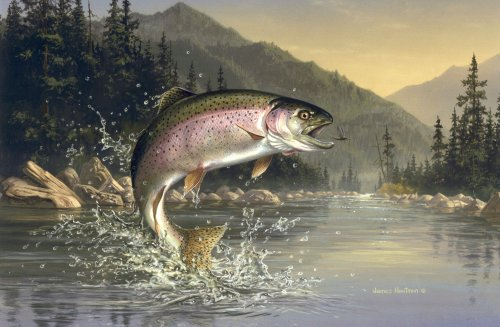 Read all about my secret method for catching trout below.