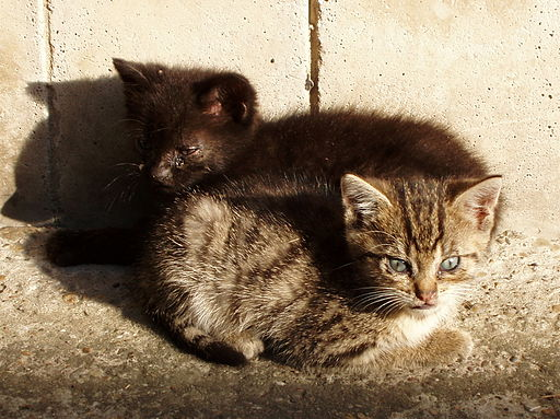 We found two kittens abandoned on the side of the road.
