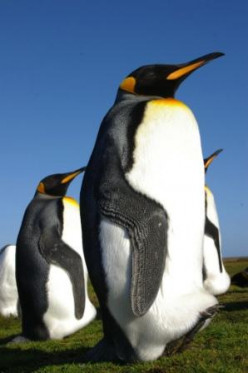 I Love Penguins!