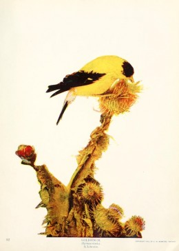 Birds and nature in natural colours 1913 -1914