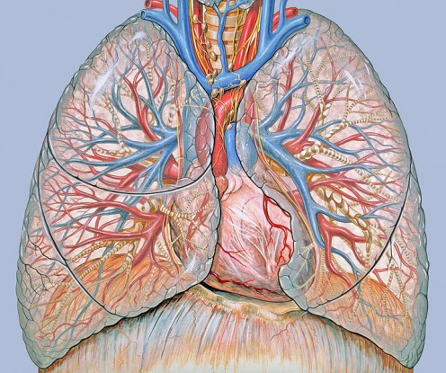 Understanding Pneumonia and Pleurisy