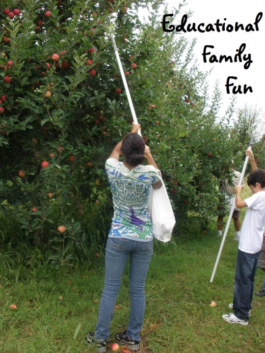 Apple picking is one of a huge list of ideas for family fun that is also educational.