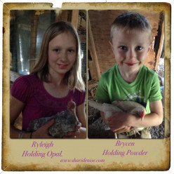 Children and Chickens attract each other.