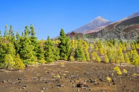Mnt Teide National Park