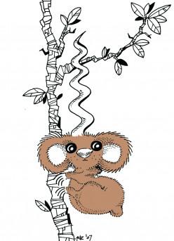 Korkskrew Koala