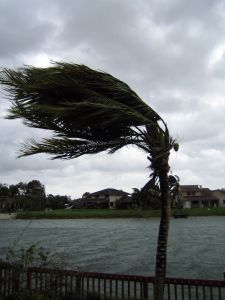 A palm tree being blown to its side in a hurricane