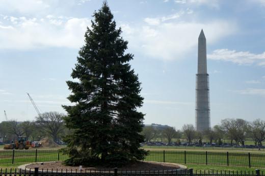 National Christmas Tree, Washington Monument