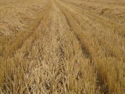 Photos of a Harvest